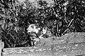 Cat Fortepan 28267.jpg