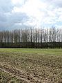 Cawston Plantation - geograph.org.uk - 756430.jpg