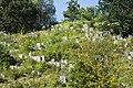 Cemetery Kremenetz 02.jpg