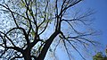 Central Park, New York, NY, USA - panoramio (112).jpg