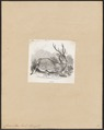 Cervus axis - 1851-1876 - Print - Iconographia Zoologica - Special Collections University of Amsterdam - UBA01 IZ21500328.tif
