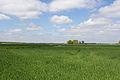 Chailly-en-Bière - 2013-05-04 - IMG 9628.jpg