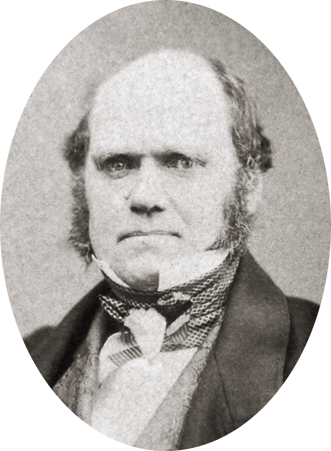Charles Darwin by Maull and Polyblank, 1855-crop
