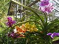 Chiang Mai Orchids P1110391.JPG