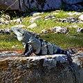 Chichen Itza - panoramio (15).jpg