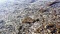 Chorniche, Westbay - panoramio (8).jpg