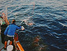 Photo of man dropping chum off the side of a boat