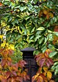 "Cincinnati - Spring Grove Cemetery & Arboretum ""Well Hidden.......Inside"" (15556364071).jpg"