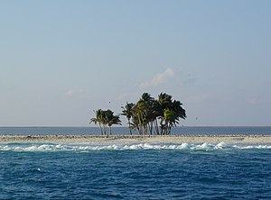 Clipperton Island - Coconut palms on Clipperton. The lagoon is visible beyond the trees.