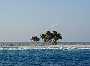 Palmen auf der Clipperton-Insel