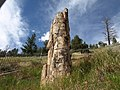 Closer shot of the petrified tree - panoramio.jpg