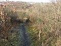 Clyde Walkway near Craighead - geograph.org.uk - 341651.jpg