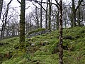 Coed Bryn-engan - geograph.org.uk - 157094.jpg
