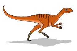 Coelurus picture2.png