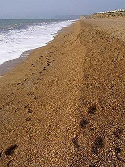 Cogden Beach, Chesil Bank - geograph.org.uk - 300199