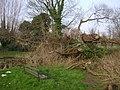 Collapsed willow, Riverside Walk, Warwick - geograph.org.uk - 1217028.jpg