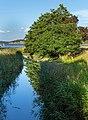 Common alders by a stream in Holma.jpg