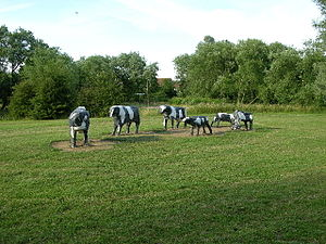 Concrete Cows - Replica Concrete Cows at Bancroft