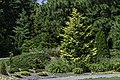 Conifer Garden 1 NBG LR.jpg
