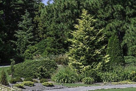 Conifer Garden at Norfolk Botanical Garden