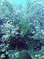 Coral scene 11 (7157576975).jpg