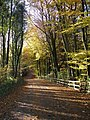 Country Park access road in autumn - geograph.org.uk - 1054550.jpg