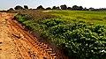 Country Road, Shfela, Israel דרך שדות, שפלת יהודה - panoramio.jpg