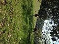 Cowabunga - panoramio.jpg