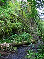 Creek in a forest in the Urals.jpg