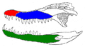 Crocodylus palustris teeth.PNG