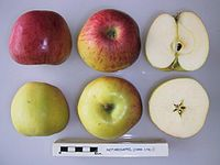 Cross section of Notarisappel, National Fruit Collection (acc. 1949-178).jpg