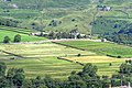 Cultivation Terraces - geograph.org.uk - 892201.jpg