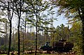 Cutting trees in the forest near Planken Wambuis restaurant - panoramio.jpg