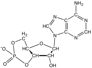 Cyclic adenosine monophosphate chemical compound