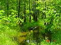 Cypress Swamp 5.jpg
