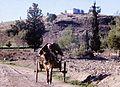 Cyprus. UNFICYP- 1969 (8386645026).jpg