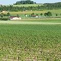 DJK-Sportplatz - panoramio.jpg