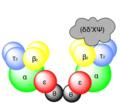 DNS Polymerase III Aufbau.png