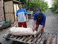 DSC01341 Pork dead.JPG