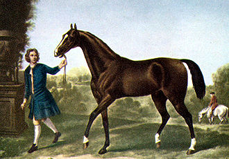 Eighteenth century painting of a dark brown horse being led by a man in blue clothes. The horse has a thin neck, tail carried high, and a small head.