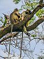 Daulatabad, Aurangabad - panoramio (39).jpg
