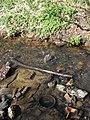 Debris in stream bed - geograph.org.uk - 745767.jpg