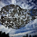 Decaying leaf lace and sky - Flickr - shannonkringen.jpg