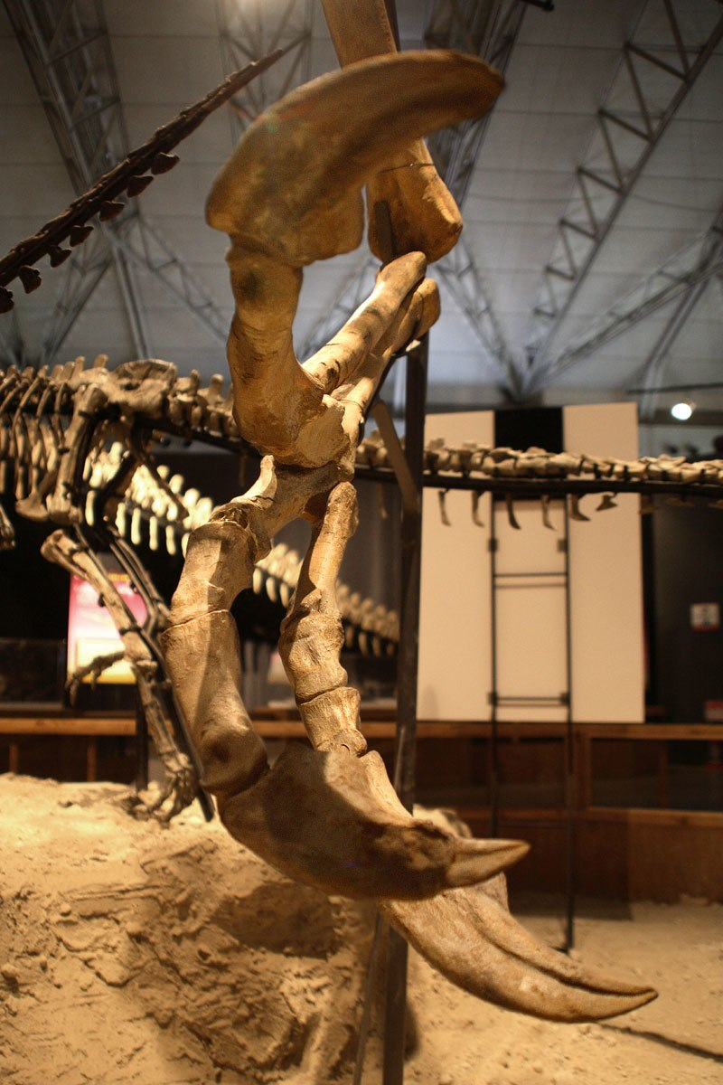 Deinocheirus hand front view