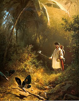 Der Schmetterlingsfänger
