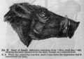 Descent of Man - Burt 1874 - Fig 67.png