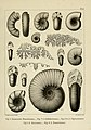 Description des mollusques fossiles qui se trouvent dans les grès verts des environs de Genève (9525353910).jpg
