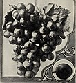 Descriptive catalogue - fruit and forest trees, vines and shrubs, palms and choice roses (1904) (20852371586).jpg