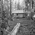 Deserted cabin, Snoqualmie Pass, October 15, 1896 (WAITE 137).jpeg