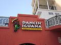 Destin FL Poppys Dancin Iguana.JPG